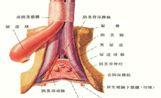 慢性前列腺炎为什么会频繁发作